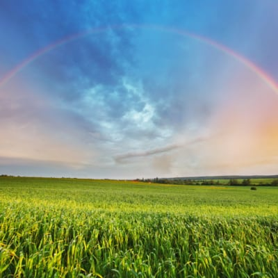 Frühlingsfeld mit Regenbogen