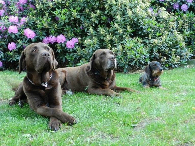 Die Hunde auf dem Ferienhof Lührs in Schneverdingen-Reinsehlen
