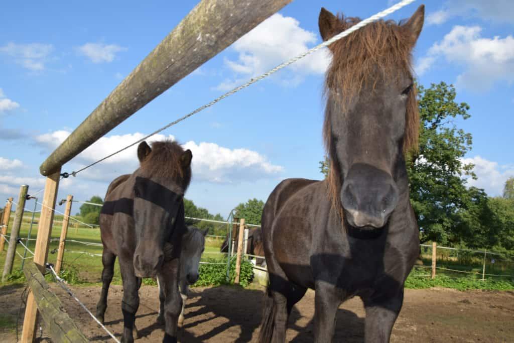 Ponys in der kleinen Reitschule